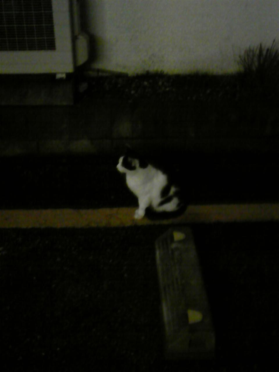 猫のある景色