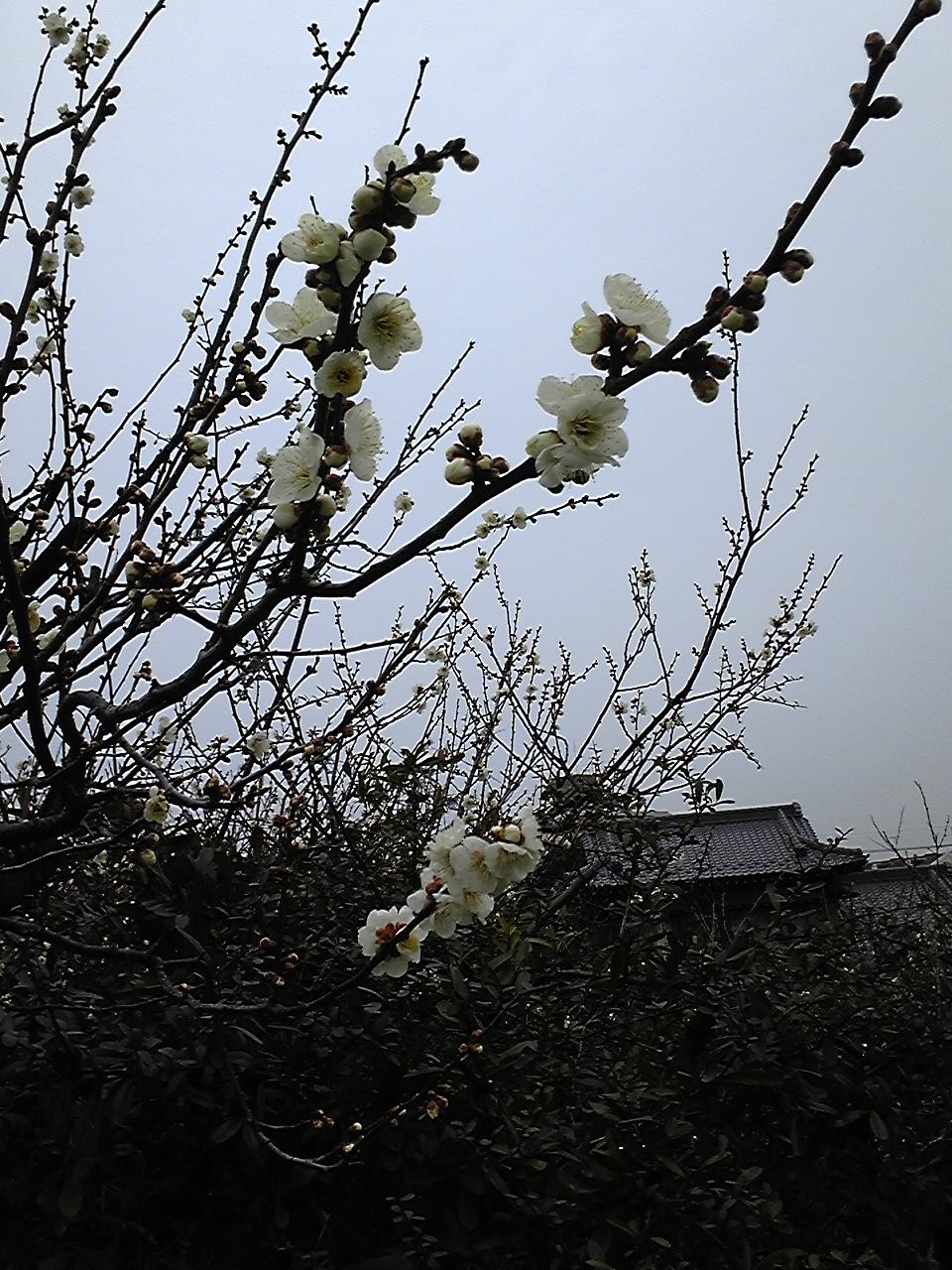 始まりは春一番